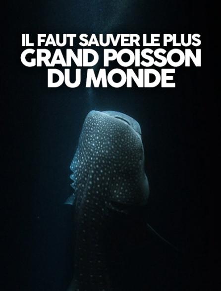 Il faut sauver le plus grand poisson du monde_Cristal-Publishing